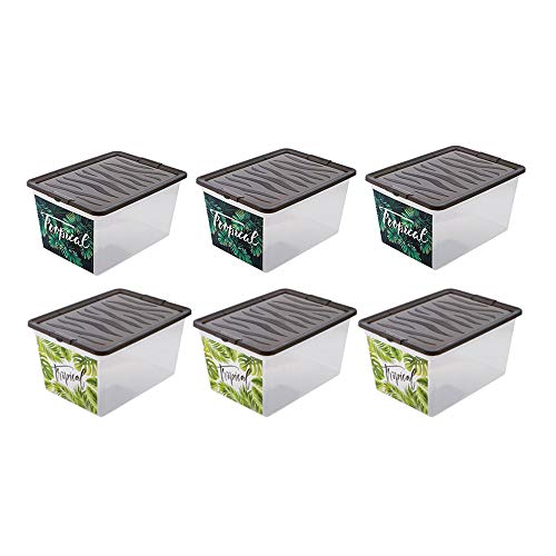 BranQ - Home essential Zebra Box Tropical Aufbewahrungsbox/Container 6er Set 30l, Kunststoff PP, Transparent, 38,4x28,3x19,9 cm (LxBxH)