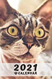 Sphynx Cat Calendar 2021: Perfect for Notes and Planning, Monthly and Weekly (2021 Planner, Diary)