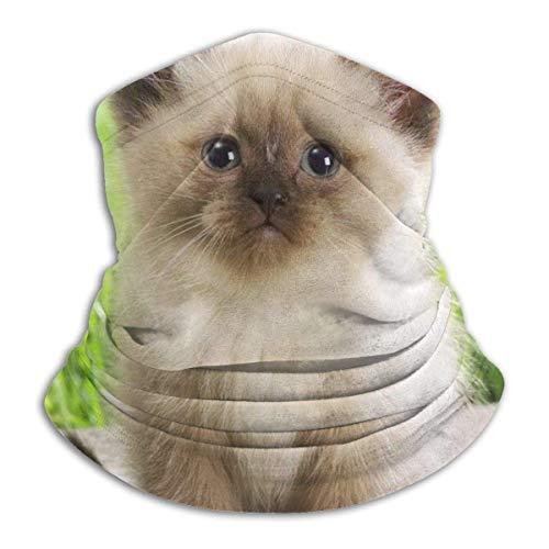 LREFON Sweet Cat Garden HD Neck Polaina Bandana Calentador de Cuello Pasamontañas para Hombres Mujeres Sol UV Protección contra el Polvo del Viento