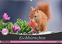 Eichhoernchen Momentaufnahmen fuers Herz (Wandkalender 2022 DIN A2 quer): Wunderschoene Grossaufnahmen entsprechend der jeweiligen Jahreszeit (Monatskalender, 14 Seiten )