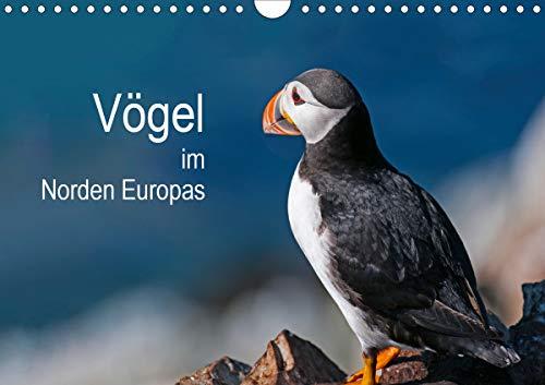 Vögel im Norden Europas (Wandkalender 2021 DIN A4 quer)