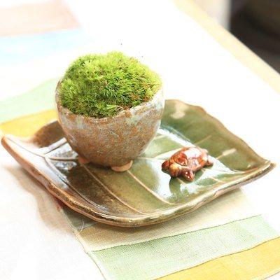 遊恵盆栽『苔盆栽 長寿苔鉢』