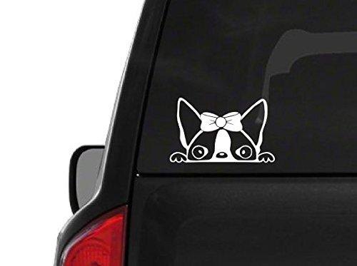 Peeking Boston Terrier Girl (A25) Vinyl Decal Sticker Car/Truck Laptop/Netbook Window