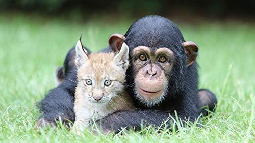 Puzzle De 1000 Piezas Chimpancé Abrazando A Un Lince Puzzles De Madera Rompecabezas De Piso De Impresión De Alta Definición Puzzle Infantil Juegos Relajantes