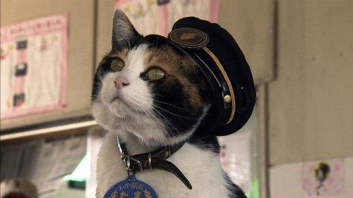 ミッドシップ『ネコを探して』