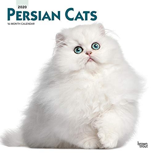Persian Cats 2020 12 x 12 Inch Monthly Square Wall Calendar, Animals Cats