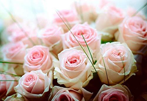 Mini Rompecabezas en Miniatura de 500 Piezas para Adultos Pink Rose Rompecabezas de cartón Resistentes, desafío de Ejercicio Cerebral, Juego de Alta dificultad, Regalo para niños 52 * 38cm