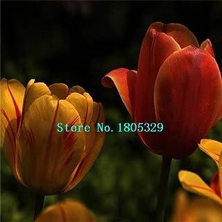 Pinkdose GGG Bulbos del tulipán del envío el 100% Semillas genuino flor del tulipán bombillas (no las semillas de tulipán) - 500 PC: Blanco