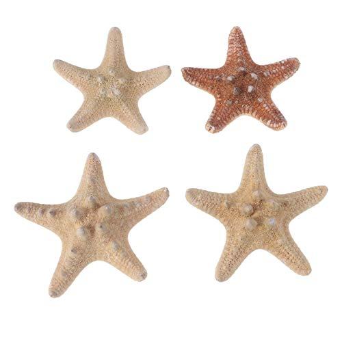 HEALLILY resina estrella de mar ornamento tropical playa océano mar decoración lápiz...