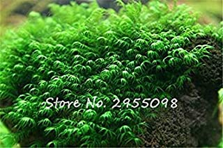 GEOPONICS Pearl Seeds seeds Water s Seeds Live Aquarium seeds Pot For Home Garden seeding 500 Particles/Bag