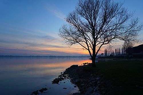 ING Wall Art Print on Canvas(32x21 inches)- Lake Water Trasimeno Umbria Tree Sunset Sky Water