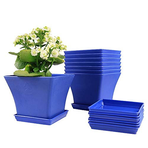 MUZHI 8 Pack Nice Square Bonsai Flower Pots with Tray,Blue Plastic Succulent Garden Plant Pot 6 Inch … (FP041-L and Tray)