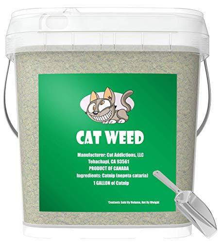 Cat Weed Catnip tiene la máxima potencia premium mezcla de nip que tus gatos se vuelven locos