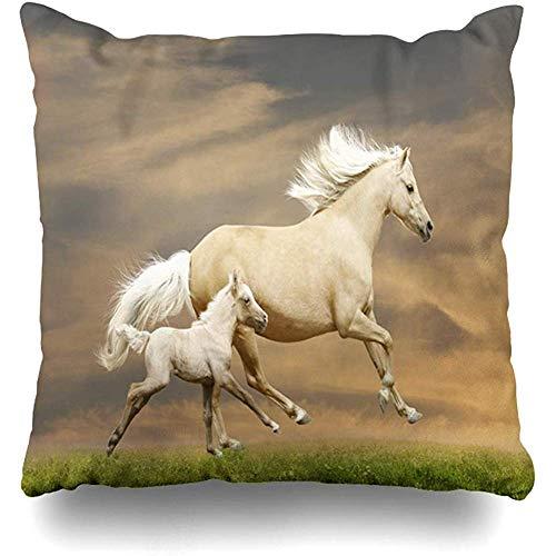 SSHELEY kussensloop halster groen wit pony's zonsondergang paard natuur kastanje geel veulen zonsopgang gratis genade actie kussensloop