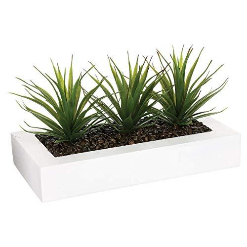 Centro de mesa - 3 Aloe Vera - H 17 cm