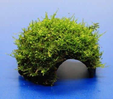 WFW wasserflora Moos-Höhle/Coco Shell - Kokosnuss mit Javamoos bewachsen