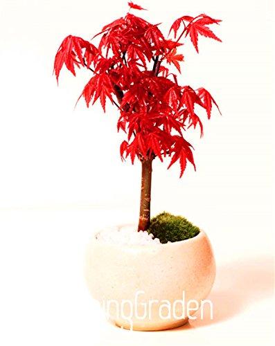 Fleurs graines de 2016 Hot vente Bonsai DIY Ceropegia huberi graines Rare Flower Garden World & Home Bonsai