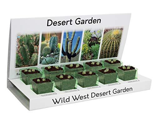 Cactus & Succulents Eco Cultivez votre propre kit 100% recyclable 5 variétés à cultiver à partir de semences fabriquées avec des matériaux 100% recyclables