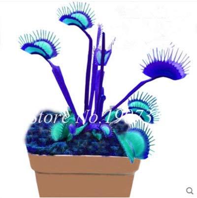 Shopmeeko Graines: Bonsai 100 Pcs/Sac Moucherolle Rare Rillettes Mixte insectivores Bonsai Plante Dionaea géant clip Dionée bateau libre: 13