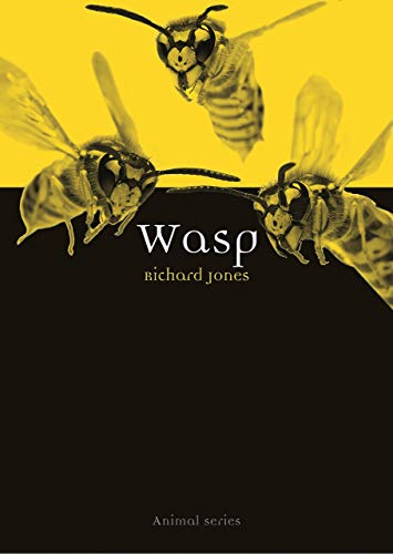 Wasp (Animal) by Richard Jones