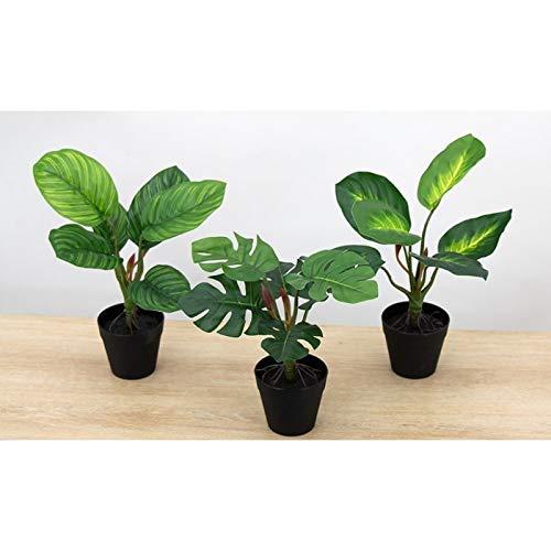 Línea Déco | Lote de 3 plantas verdes tropicales artificiales de tacto natural | 25 cm | Planta verde artificial | Planta tropical | Decoración de interior | casa oficina