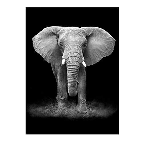 Impressions sur Toile Art Mural Tableau - Grand éléphants Avant Noir et Blanc Animal Posters: Peinture sur Toile Home Decor Photo, 40 * 60cm