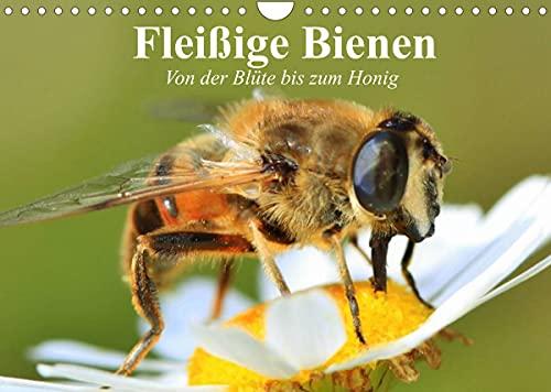 Fleißige Bienen. Von der Blüte bis zum...
