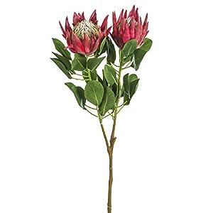 SilksAreForever 34″ Artificial King Protea Flower Stem -Beauty (Pack of 6)