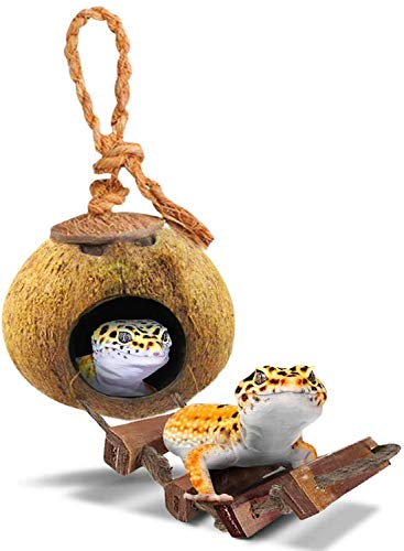 SunGrow Raw Coconut Husk Hut with Ladder for Leopard Gecko, 5.1 Inches with 2.4 Inches Opening Diameter, Nesting Home Hide, Coco Texture Provide Food for Pets, Durable Cave Habitat with Hanging Loop