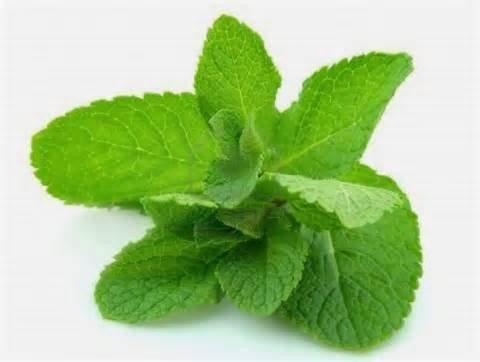 200 légumes vert menthe Graines de menthe poivrée Balcon pot Aromatique Graines de plantes rares herbe pour la santé