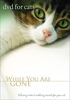 For Cats: While You Are Gone