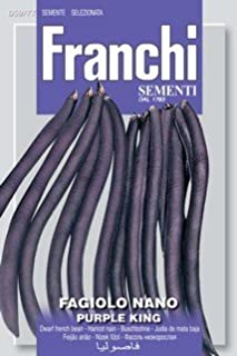 Italian Heirloom Bush Bean - Purple King