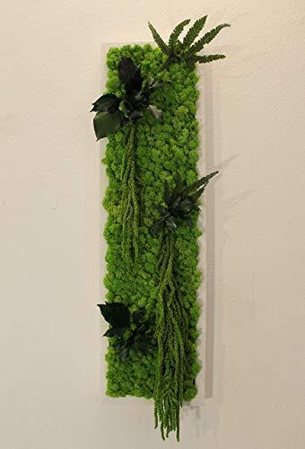 Quadro Vegetale - 70 x 20 cm - Verde 15 - Edera-Felce-Amaranthus