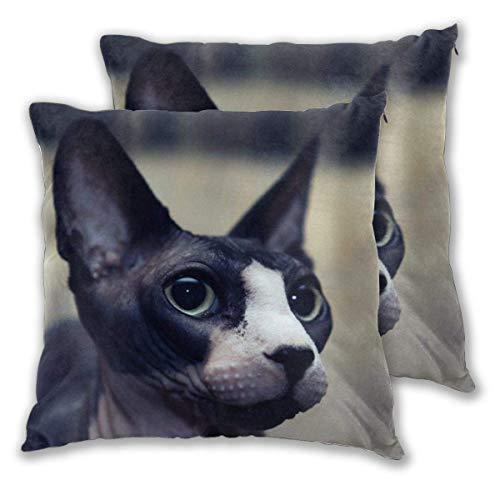AEMAPE Soft Square Throw Kissenbezüge, Naked Cat 2 Pack dekorative Kissenbezüge Kissenbezüge für Sofa Schlafzimmer Auto 40X40 cm