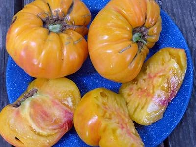 PAPCOOL Old German Tomato G - 0.16 SẸẸDS Cheap mail order specialty store Louisville-Jefferson County Mall