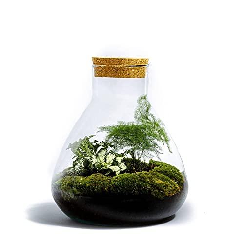 DIY Öko Flaschengarten von Botanicly: Erlenmeyer Medium – Botanisch (Höhe: ca. 26 cm, Breite: ca. 22 cm)
