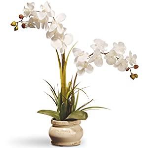 National Tree Company Artificial Silk Flowers Includes Ceramic Pot Base Orchid-24 Inch, 24 Inch, Cream Orchid