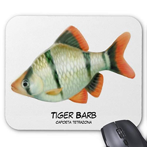 Mauspad mit seidenweicher Textiloberfl?che - (antistatische Wirkung - perfekte Gleiteigenschaft - Abma?e: 200 x 200 x 0,3 mm (B x H x T)) PC / Computer Mousepad-Tiger Barb Aquarium Fisch Mousepad