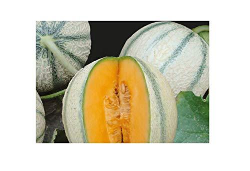 4 × Zuckermelone Artemis F1 - البطيخ