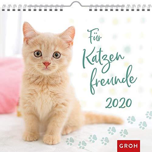 Für Katzenfreunde 2020: Dekorativer Wandkalender mit Monatskalendarium