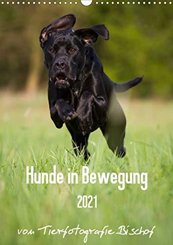 Hunde in Bewegung 2021 von Tierfotografie Bischof (Wandkalender 2021 DIN A3 hoch)