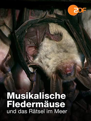 Musikalische Fledermäuse und das Rätsel im Meer