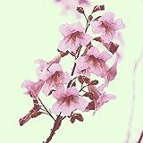 1000 Pezzi Paulownia Semi Albero Resistente Facile Da Piantare Decorazione Paesaggistica Di Buona Qualità Fiori Rosa Per Piantagione Di Giardini E Cortili