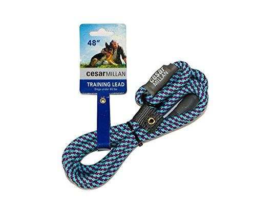 Cesar Millan Slip Lead Leash | Dog Leash | in Training Leash | (Regular, Aqua/Purple)