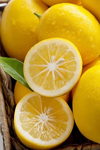 Bio-Saatgut Nicht nur Pflanzen: 1 Glon (4in CitraPot): Meyer Lemon (orange Hybrid) (Kein Schiff TX, CA, AZ, LA) mit der Faehre