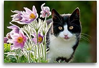 Premium - Lienzo de tela (45 x 30 cm, horizontal, diseño de gato curiosidad por las flores de las abrazaderas de la cocina, imagen sobre bastidor, abrazaderas de cocina (animales)