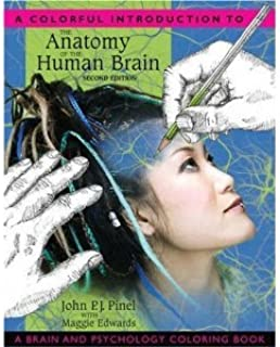 Anatomy of the Human Brain Psychology 2nd (second) Edition BYPinel