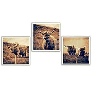 3er Set Galloway Rinder Schottland Foto auf Holz, im Quadrat, handmade, 13 x 13 cm