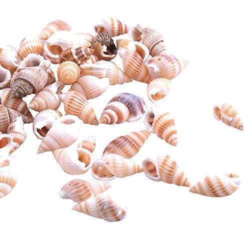 Queen.Y 100 Conchas de Conchas Marinas Mezcladas Conchas Marinas de Playa Varios Tamaños de Conchas Naturales para Peceras Decoraciones para El Hogar Fiestas Temáticas en La Playa