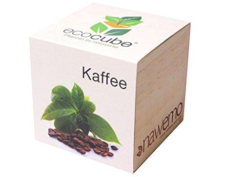 Ecocube Kaffee im Holzwürfel